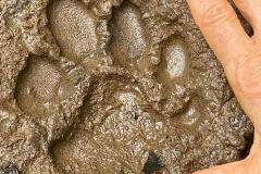 puma footprints 2